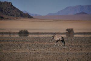 Tiere in Namibia in freier Wildbahn 2